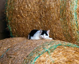 Cat Health for Country Cats