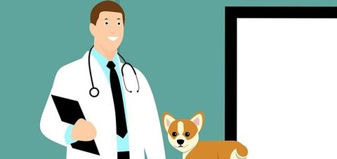 illustrated image of a vet with a white coat and stethoscope and a small dog to his right against a green background